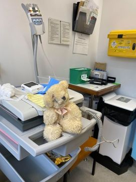 Liz Venus Bear Hospital 2