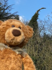 Warwick dinosaur tree bear